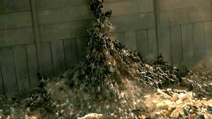pile of zombies going up the israeli wall in the movie World War Z