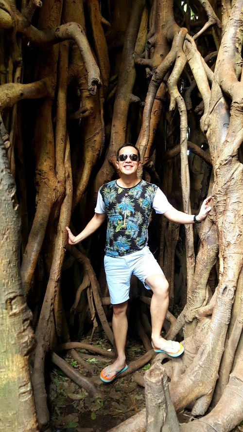"super UGAT! ""inside"" the massive tree"