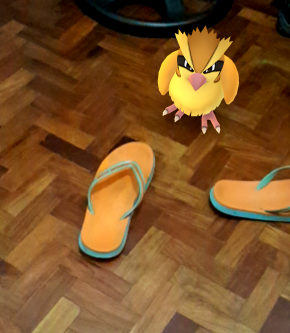 a PIDGEY found inside my unit trying to fit my Marc Jacobs slippers...